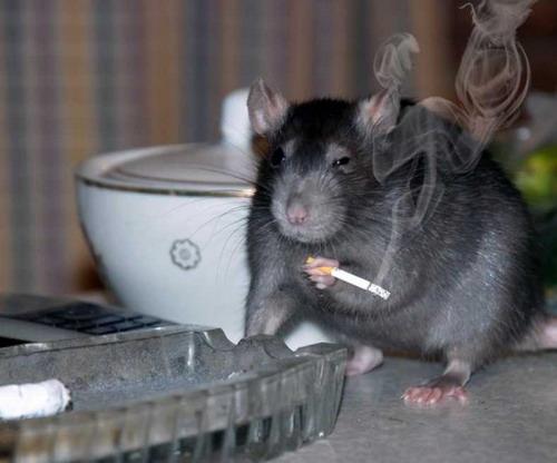 το κάπνσισμα βλάπτει σοβαρά την υγεία