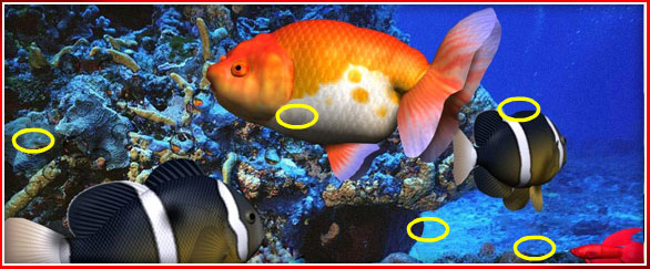 photoplay_animals_fish