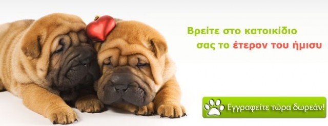 webpet-social-love-pet