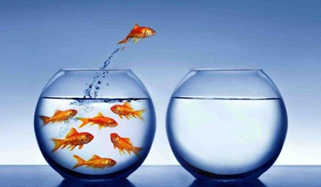 fish-epityxia